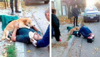 Фото, доказывающие, что верность и любовь животных безгранична!