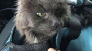 Двадцатилетнего кота сдали в приют. Он сидел очень тихо, не зная, что будет дальше