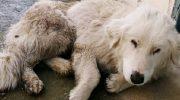 Собака подошла к дверям чужого дома и рухнула у порога, закрыв глаза.