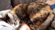 «Отдайте мне кошку, которая никому не нужна!» Девушка удивила сотрудников приюта неожиданной просьбой