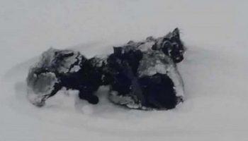 Мужчина заметил черную «тряпочку» в сугробе. Подойдя ближе, он увидел трех замерзающих котят