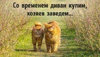 Котов невозможно не любить.И этому есть объективные причины.