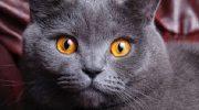Кошка является показателем вашей жизни