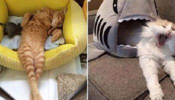 Фото-доказательства того, что коты могут спать там где им положено!