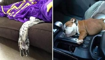 Улетная подборка фото очень уставших домашних животных