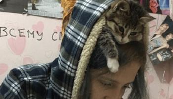Эти кошки точно променяли совесть на желание быть хозяевами в доме