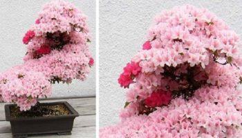Подборка фото удивительно красивых деревьев бонсай в мире