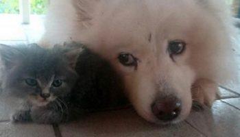 В траве лежал серый комочек и он так бы и пропал на улице, но пес его нашел и спас