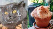 Фото котов-хулиганов, которые всегда веселят и удивляют