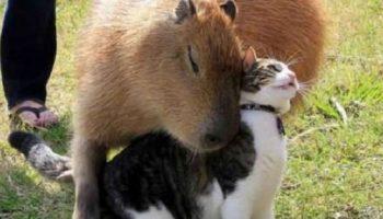 Подборка фото очаровательной дружбы между животными разных видов. Это так мило….