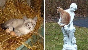 20 мест, где точно не должно быть кота, а он есть!