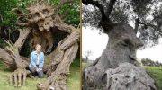 24 фантастических фото деревьев, как из сказок и мульфильмов!