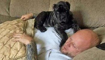 Мужчина вырастил самого огромного щенка в мире, попавшего в книгу рекордов!