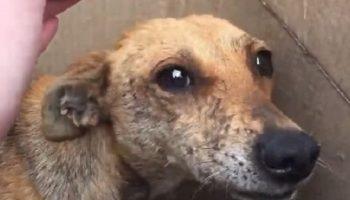 Люди заглянули в коробку у дороги и увидели испуганную собаку и больных щенков