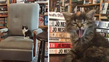 Книжный магазин привлекает сотнилюдей маленькой хитростью!