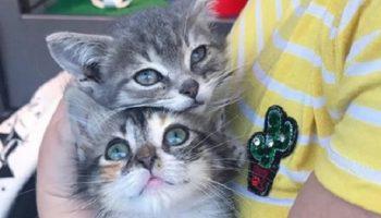 Пара больных и бездомных котят не могли друг без друга