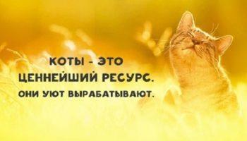 Я – кот, это – моя работа: обязанности по дому каждого кота
