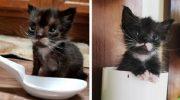 Котёнок, весом всего 113 г, решил во что бы то ни стало вырасти большим и сильным