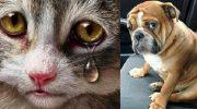 Обиженные животные, которые имели неосторожность поверить хозяину
