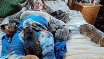 Кошки почувствовали, что хозяйке нездоровится и принялись пятером ее лечить так, как умеют