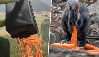 Австралийцы кормят спасенных диких животных, сбрасывая овощи с самолетов