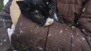 Девушка заметила кошку, лапы которой примерзли ко льду