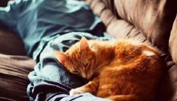 Кошке просто обязательно необходимо лечь на стопку чистого белья или забытый на диване свитер