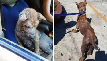 Женщина обнаружила под машиной напуганное существо. На его теле совсем не было шерсти!