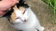 При виде спасателя кошка храбро подошла, заглянула в глаза, а потом отвела его туда, где требовалась помощь…