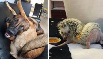 Самые смешные животные, которые дарят позитив!