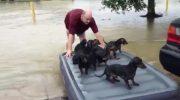 Мужчина спас соседских щенков, пока люди спасали свое имущество