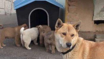 Собака с маленькими щенками пришли в дом к незнакомому человеку. Мужчина был в растерянности