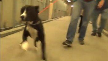Посмотрите на реакцию пса Бенни, который только что узнал, что его забирают из приюта домой