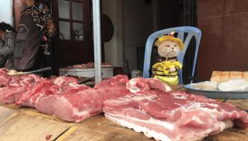 На вьетнамском рынке, кот продает рыбу. Он завоевал сердца тысяч покупателей