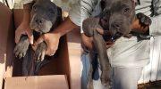 На пороге приюта нашли коробку со щенком и душераздирающей запиской