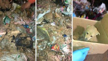 Бригада по сбору мусора голыми руками перебрали огромный контейнер мусора, чтобы спасти щенка