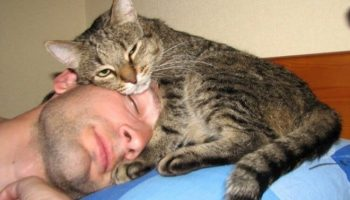 15 раздражающих и одновременно умиляющих признаков кошачьей любви к человеку