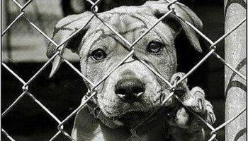 Для чего Творец создал собак? Неужели только для того, чтобы погибнуть от рук людей…Я выживу