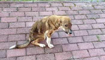 Бездомный щенок с проблемами позвоночника и кучей болячек нашел дом за 8 000 километров