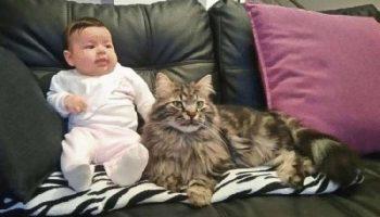 Прибившийся на ферму кот вскоре стал настоящим помощником для ребёнка хозяйки