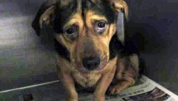 Самая грустная собака Калифорнии, по кличке Бенджи, обрела новую семью