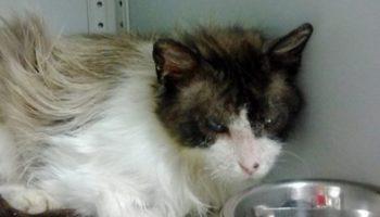 Девушка не побрезговала грязью, чтобы спасти измученную кошку