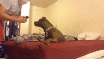 Мужчина принес с улицы котенка, но не знал, как к этому отнесется собака!