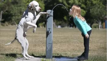 13 доказательств того, что ребенок и собака лучшие друзья!