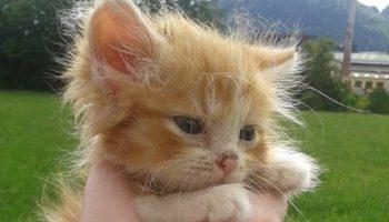 Рыжего котенка нашли в лесу без мамы-кошки. И вот два года спустя!