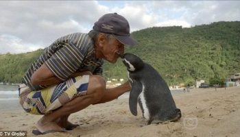 Пенсионер спас от смерти пингвина. С тех пор птица каждый возвращается к нему, преодолевая 8 000 км!
