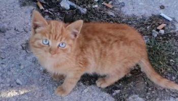 Бездомный котенок жалобно плакал под машиной, ища укрытие