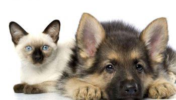Веселая подборка фото дружбы кошек и собак