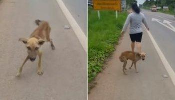 Истощенный щенок подбегал к прохожим и выпрашивал еду, но все проходили мимо