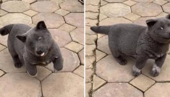 Щенок Гао-Мяо не дает покоя пользователям сети и заставляет гадать, кошка он или собака